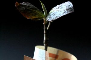 Growth Stock & Interest Rate